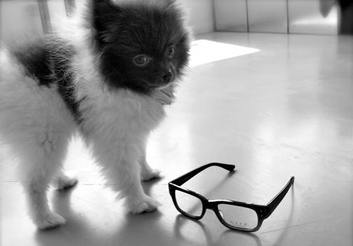 doggieeyeglasses.jpg